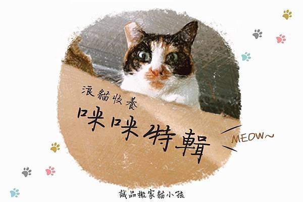 貓咪首圖.jpeg
