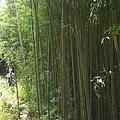 桂竹林 大象