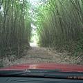 綠色滴竹林道