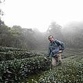 包種茶園-