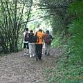 漫步於林蔭步道
