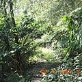 雜木林水泥步道