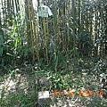 竹林滴鬼澤山