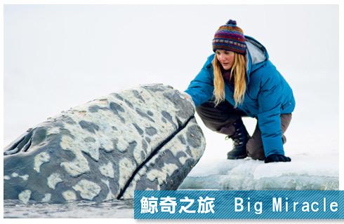 鯨奇之旅 Big Miracle
