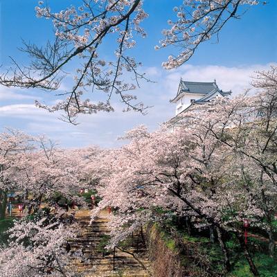 1鶴山公園kakuzan-park(tsuyama-shi).jpg