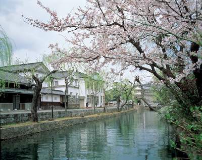 1倉敷美觀bikanchiiku-sakura(kurashiki-shi).jpg
