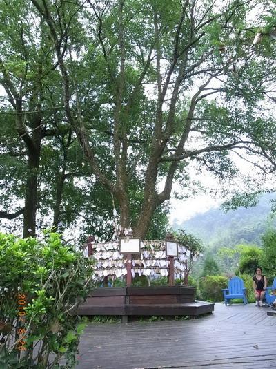 香草森林2