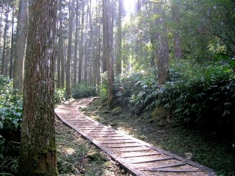 2008溪頭明山 175.jpg