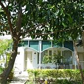 房前茄苳樹