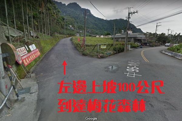 梅花森林(600X400).jpg