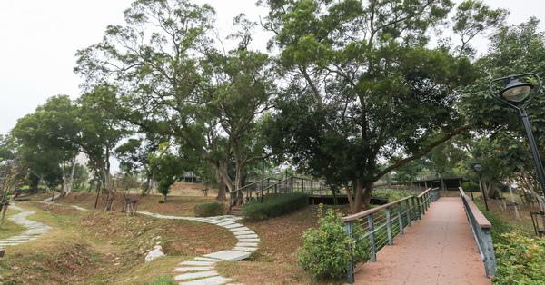 台中沙鹿|公館公園|整排相思樹還有大樟樹|開滿花的馬纓丹