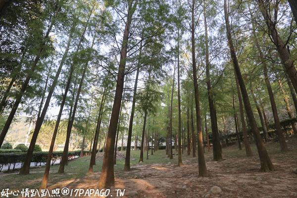 台中后里|如光山寺池杉林,泰安國小落羽松附近另一處景點