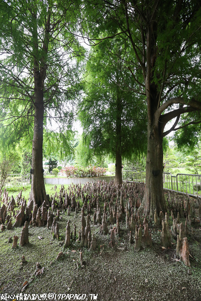 《台中.潭子》石牌公園-公園內一片奇特的鐘乳石樹根,又稱台中小桂林