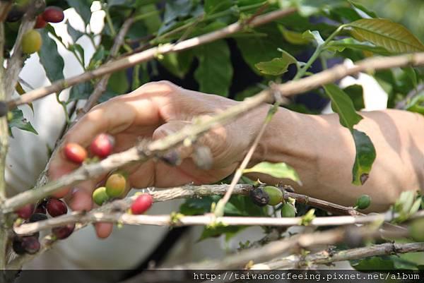 每顆咖啡豆,都帶著一份農民的熱忱。