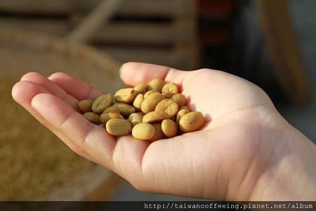 手、咖啡豆