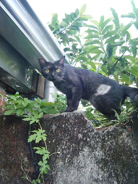 猴硐貓1.JPG