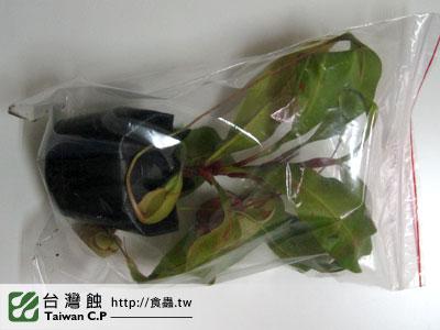 台灣蝕-1221-台東莊小姐-出貨品管-2.jpg