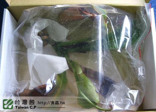 2010-09-20-張先生-豬籠草出貨.jpg