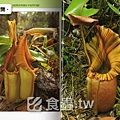 台灣蝕-食蟲書籍-Pitcher Plants of Sarawak-內頁預覽1.jpg