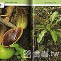 台灣蝕-食蟲書籍-Pitcher Plants of Sarawak-內頁預覽2.jpg