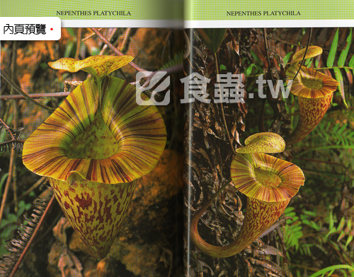 台灣蝕-食蟲書籍-Pitcher-Plants-of-Sarawak-內頁03.jpg