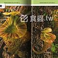 台灣蝕-食蟲書籍-Pitcher Plants of Sarawak-內頁預覽3.jpg