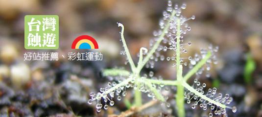 台灣蝕遊-好站推薦、彩虹運動.jpg