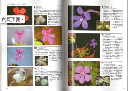 台灣蝕_食蟲植物世界_05.jpg