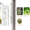 台灣蝕_Magical-Plants_6