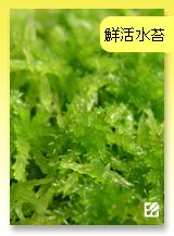 台灣蝕-鮮活水苔.jpg