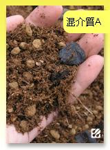 台灣蝕-混合介質A.jpg