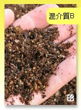 台灣蝕-混合介質B.jpg
