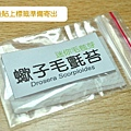 台灣蝕-苞芽出貨包裝流程-4.jpg.jpg
