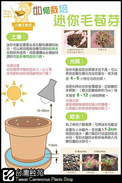 台灣蝕-如何栽培迷你毛苞芽說明圖.jpg