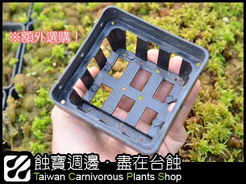 額外加購鮮活水苔栽培用籃格盆-1.jpg