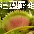 台灣蝕-台北建國假日花市-擺攤活動