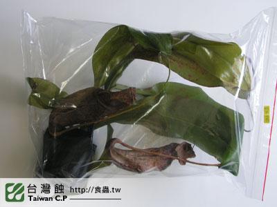 台灣蝕-0206-李小弟出貨品管-2.jpg