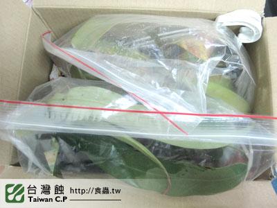 台灣蝕-0110-出貨品管-5.jpg