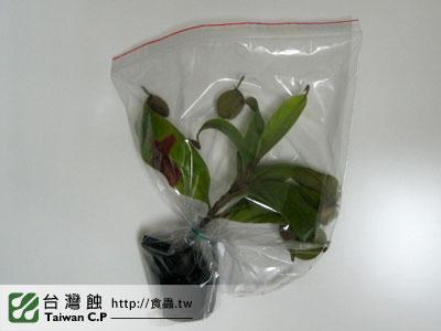 台灣蝕-1112-出貨品管-2.jpg