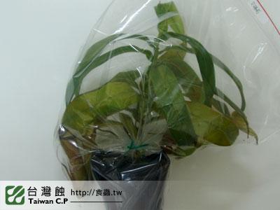 台灣蝕-1030-出貨品管-2.jpg