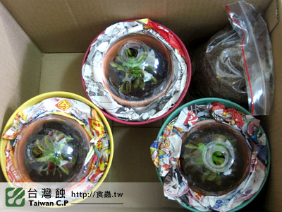 台灣蝕-1105-出貨品管-2.jpg