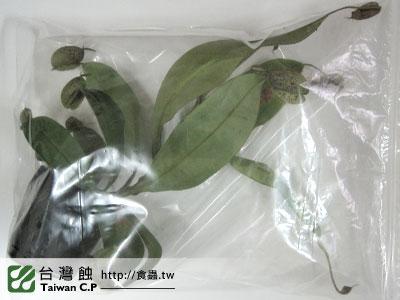 台灣蝕-0221-謝小姐出貨品管-1.jpg