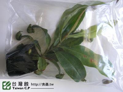 台灣蝕-0206-鄭先生出貨品管-2.jpg