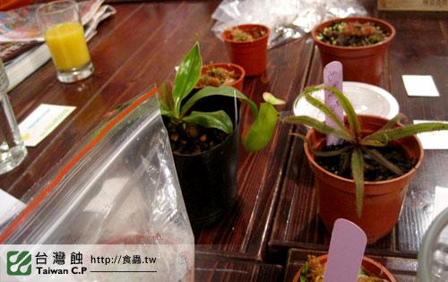 TCP1食蟲交流會-07-台灣蝕.jpg