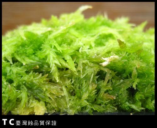 鮮活水苔-2.jpg