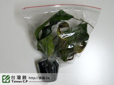 台灣蝕-1112-出貨品管-1.jpg
