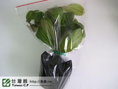 台灣蝕-1102-出貨品管-2.jpg