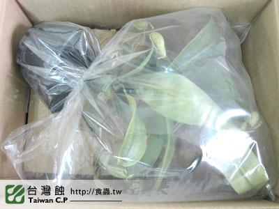 台灣蝕-0223-邱先生出貨品管-2.jpg