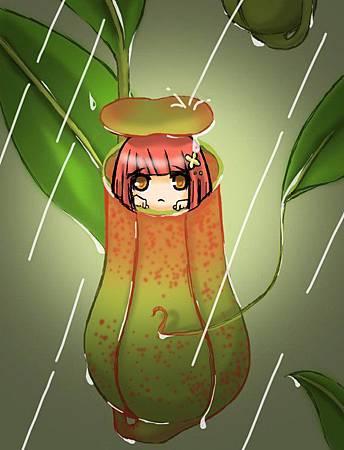 下雨天時豬籠草的用途.jpg