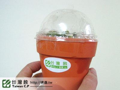 台灣蝕-1202-出貨品管-1.jpg
